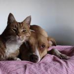 Desillusionierende Katzenmenschen