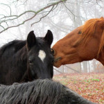 Foto von zwei Pferden