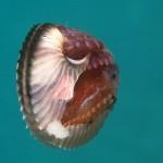 Kraken ohne Bindungsangst