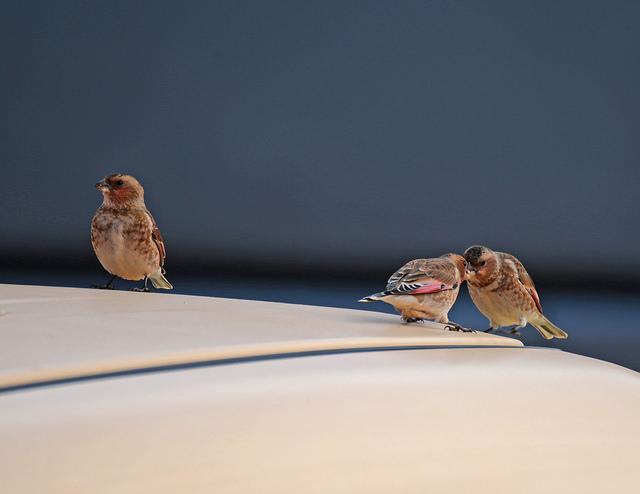 Vögel auf einem Dach