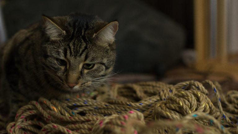 Katze sitzt vor einigen Seilen